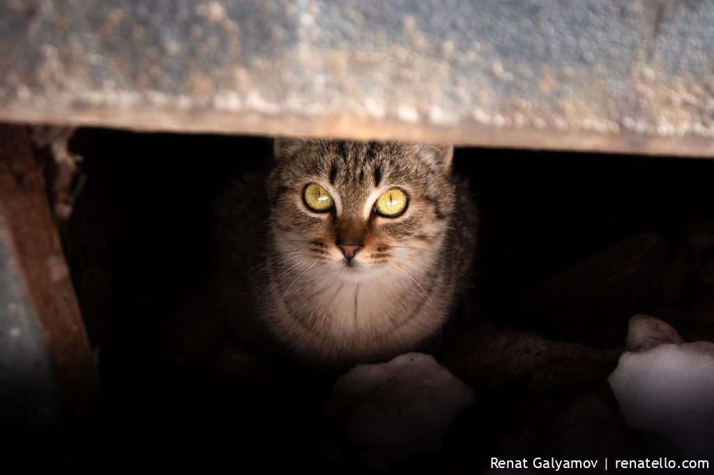 Cat. Кошка.