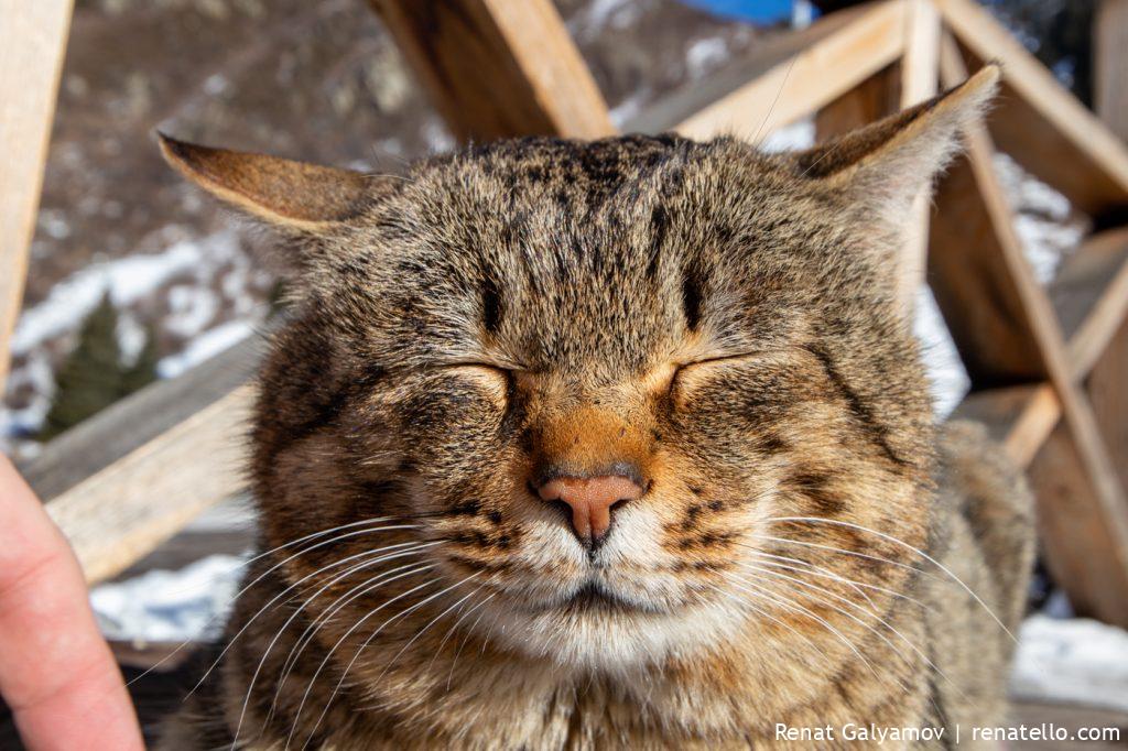 Cat. Кот.