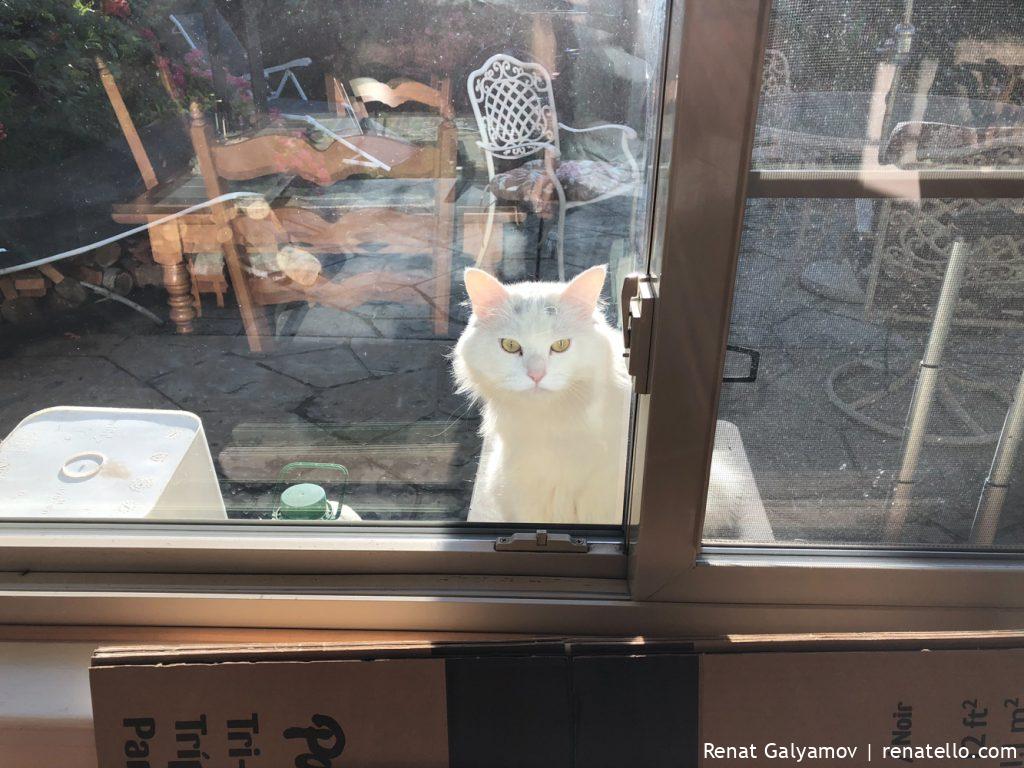 Neighbour's grumpy cat is not in the mood.