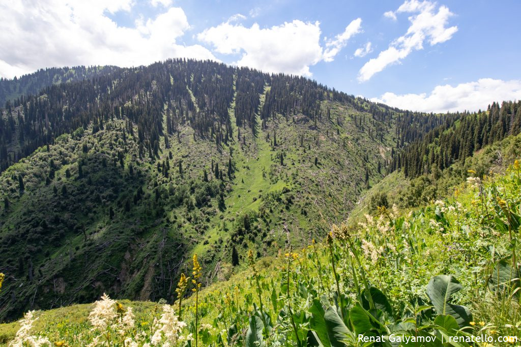 Uprooted trees in the mountains of Almaty